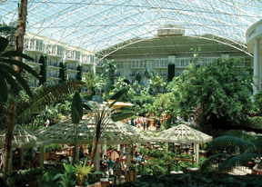 Tropical plants trhive indoors at Opryland