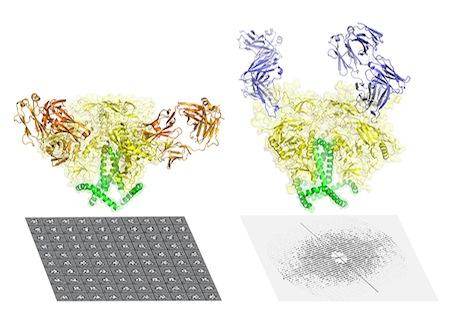 AIDS protein