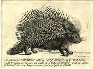 Frederick Hendrik Van Hove, 'The famous Porcupine,' engraving, second half of the 17th century.