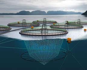 An artist's conception of a fishfarm on the ocean.