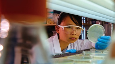 A UC San Diego student examines a bacteria culture. (Photo courtesy UC San Diego)