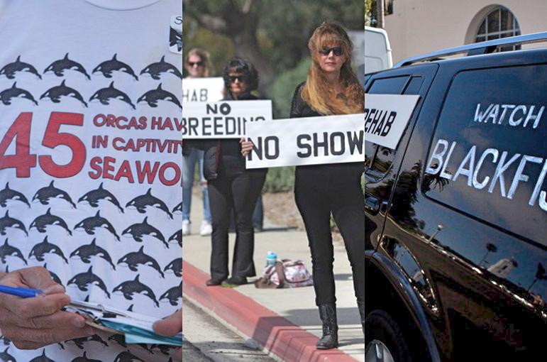SeaWorld agitators
