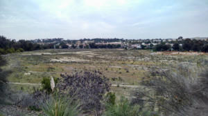 One Paseo site looking northeast toward Del Mar Heights Town Center. (Photo by Chris Jennewein)