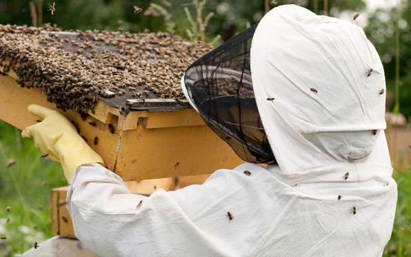 The new beekeeping ordinance creates three tiers of distance regulations for beekeepers.