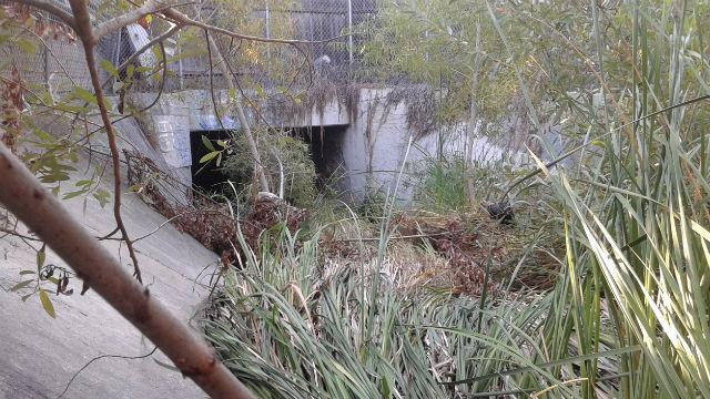 An obstructed storm drain at Via De La Bandola in San Ysidro. (Courtesy David Alvarez)