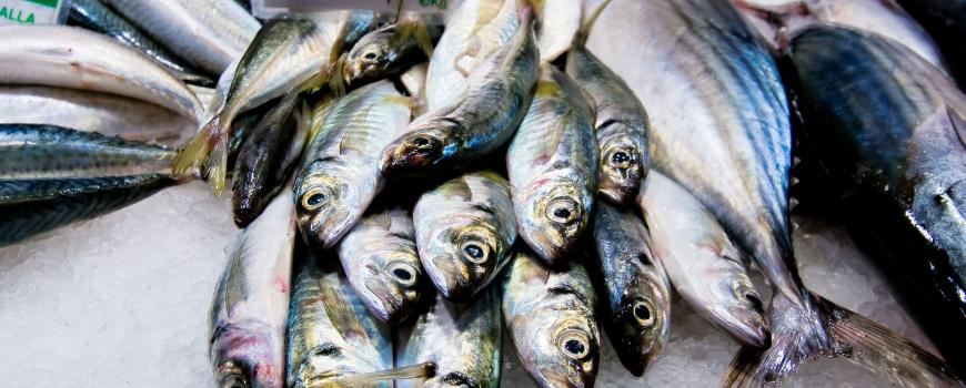 Analysis of seafood found fish throughout the world's oceans are contaminated with pollutants.