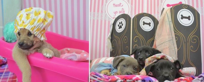 """The 19 """"Sweetheart"""" puppies (named after heart-happy, loving nicknames like Sweetie, Honey, Baby and Sugar) have thrived under center medical and foster care and will go available this Valentine's week."""