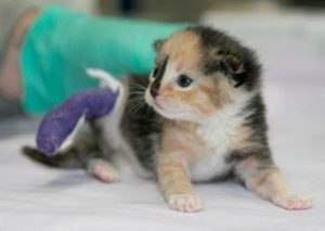 Sophia was born with the umbilical cord around her hind leg that damaged its development, requiring amputation.